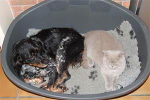 La chienne Chanelle et le chat Goldy s'entendent parfaitement bien