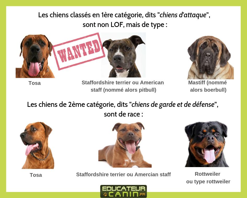 Les races de chiens dangereux